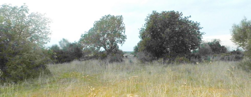 Plot in the country between Santanyi – Es LLombards — T 08