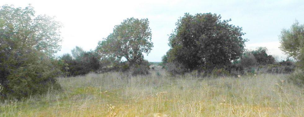 Grundstück bei Es LLombards – Santanyi mit Bergblick — T 08